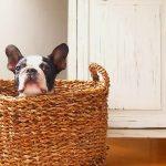 愛犬もこれで幸せに!意外と便利な折りたたみ式サークル5選!