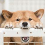 犬が人間を噛むその理由とは?噛みぐせの対応策を徹底調査!!