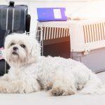 愛犬と楽しい暮らし。好みの布でケージカバーを手作りしよう
