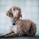 犬におしゃれな首輪を見つけたい人必見!!選ぶ時のポイントとは?
