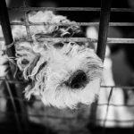 はじめて犬を飼う方におすすめ! アイリスオーヤマの犬用ケージ3選