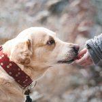 愛犬のこと理解してる?犬がおもちゃでアピールする心理とは?