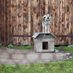 どのハウスがお好み?犬用のおしゃれな室内・室外ハウス特集