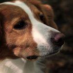 愛犬がケージ内でのトイレトレーニングに失敗する3つの理由!