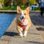 愛犬のお散歩時の必需品!!お水の正しい使い方を知ろう!!