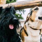 不安解消!犬も快適なサークルはこれ!屋外で飼う時の注意点は?