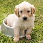 犬が留守番中にトイレを失敗する理由は不安が関係していた?
