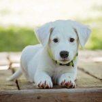 サークルの重要性!愛犬におすすめする安らぎの空間3選!