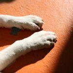 犬の爪とぎ? ストレスが原因? 穴掘りに隠された秘密とは
