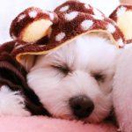 愛犬の服をおしゃれに!ショップ・通販・手作り全部魅せます!!