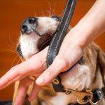 犬の噛み癖を防止しよう!3つの方法をご紹介します!