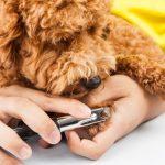 愛犬の爪が伸びすぎた!伸びちゃった長い爪、うまく切れますか?