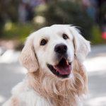 吠えるタイミングはいつ?愛犬をしつけるにはどうすればいい?