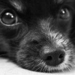 犬がトイレを我慢する!飼い主さんが気づかない犬の事情。