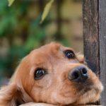犬のトイレシートに関する困り事。どうしたらきちんとできる?