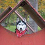 犬の留守番中のトイレが気になる人必見!気を付けるのはココ!