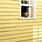 留守番時は愛犬をサークルに!?安心安全な理由をご紹介!