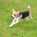 お役立ち情報満載! 犬のおもちゃ「ボール」を徹底検証
