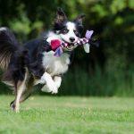 犬のおもちゃの時代は変わった! 今人気の動くおもちゃとは?