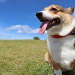 犬好き集合! 関東圏内の散歩ができるおすすめレンタルドッグ