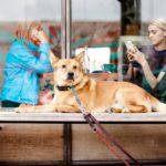 愛犬のために通わせたい方必見!! 格安しつけ教室は効果ある?