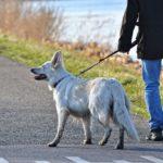 今度こそ散歩時のしつけを成功させて愛犬と外出を楽しもう!