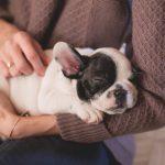 ここが重要! 子犬を迎えたら始めたい関係深まるしつけ方とは?