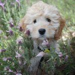 愛犬の体が汚れている? 散歩後の手入れで毎日清潔なわんちゃんに!