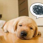 愛犬が口にしてるその食べ物、毒なんじゃ?致死量を解説!