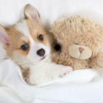 愛犬大喜び!! わんちゃんの好きなおもちゃをご紹介します!