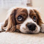 犬もストレスがたまる! ストレスが引き起こす怖い病気とは?
