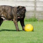 私の愛犬が選んだおもちゃベスト3!不動の一番人気はコレだっ!
