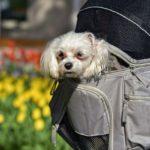 犬の散歩バッグ8つを厳選! おしゃれなものから手作りまで!