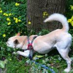 犬の臭い対策はしていますか? 原因箇所や消臭方法を紹介!