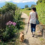 愛犬との散歩時間の長さは?タイミングは?すべて答えます!