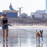必見! 犬の散歩コースはいつも同じ? そんなあなたは要注意!