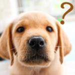 愛犬のご飯の量守っていますか? 意外と知らない正確なご飯の量