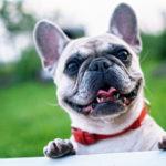 愛犬のおやつにはさつまいもが鉄板な理由とレシピを紹介!