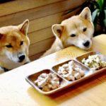 愛犬にもご飯台が必要??世界に1つの手作りご飯台を作ろう!!