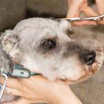 犬の毛並みを良くしたい! 食べ物の徹底改善が美毛への近道!