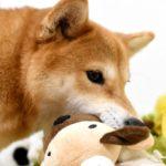 あなたも愛犬も癒される! ぬいぐるみのおもちゃを大特集
