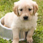 犬の下痢に効く食べ物は? ビオフェルミンが効くって本当?