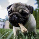骨が食べたい!! 愛犬の願いをかなえるのは飼い主さん次第!