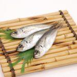犬も魚好き! 悩みを食事で改善? 魚をおすすめする理由とは?!