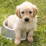 愛犬がご飯を食べたのにご飯を欲しがる?原因と対策を徹底解剖!