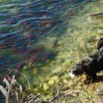 愛犬に魚や魚介類はあげて良いの? その疑問を徹底解説!